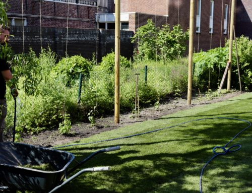 """De """"Beer Garden"""" wordt aangelegd"""